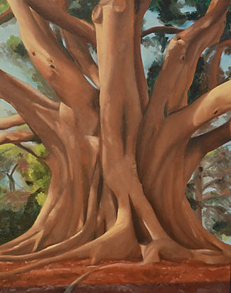 Margherita Sanguineti Art Moreton Fig Trees