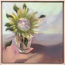 'King Protea', Oil on wood panel, 42.5 x42.5 cm framed $550