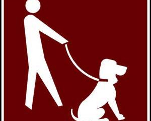 Ten Reasons to Keep your Dog on a Leash