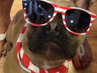 Keep Your Pets Safe During the 4th of July!