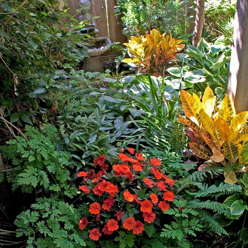 How to create a beautiful shade garden!