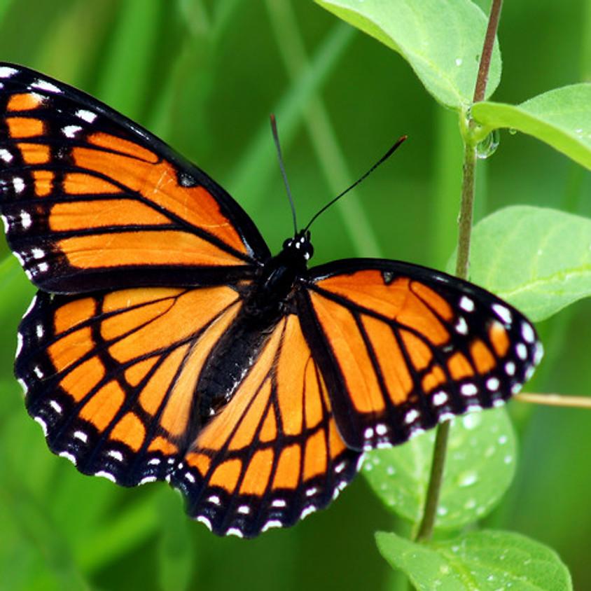 Hummingbird/Butterfly Gardening