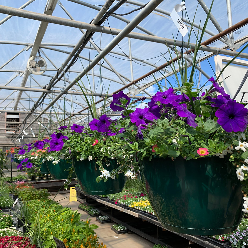 """Build your own 12"""" hanging basket"""