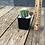 "Thumbnail: Cactus Assorted 2"""