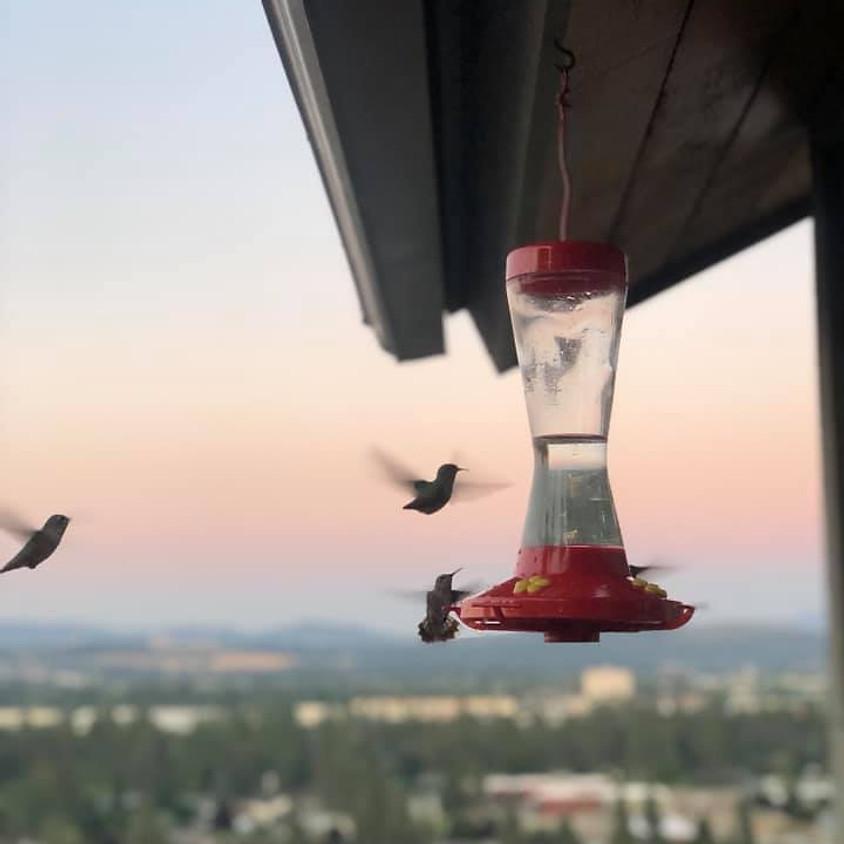 Hummingbird Care and Plants!