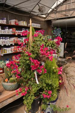 Large Houesplant