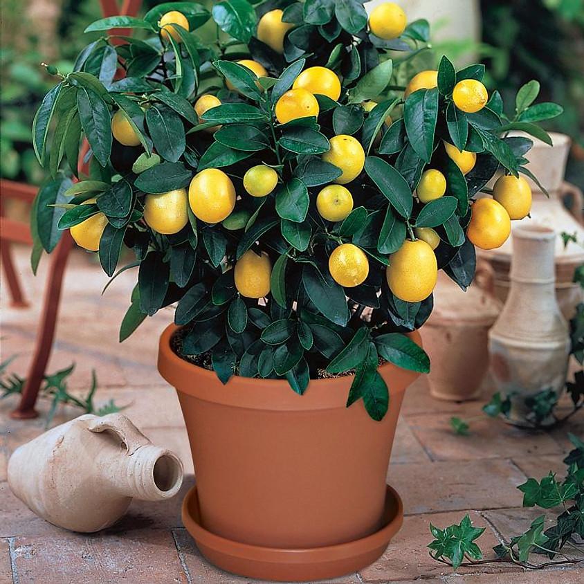 Citrus Growing Class