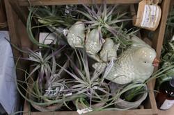 Purple Air plants