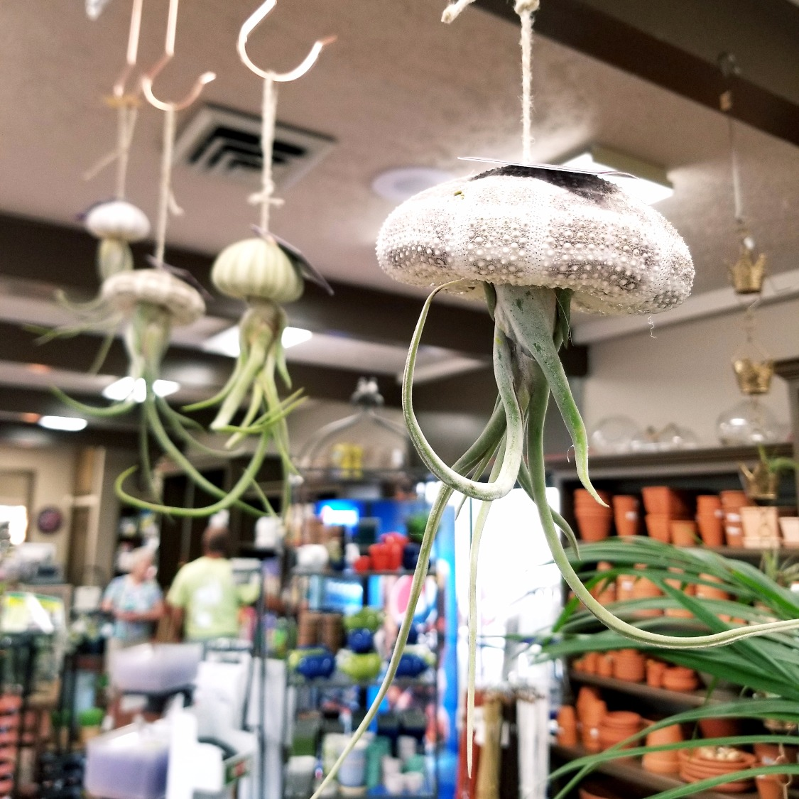 air plant novelties
