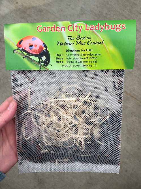 Lady Bugs -1500 Count