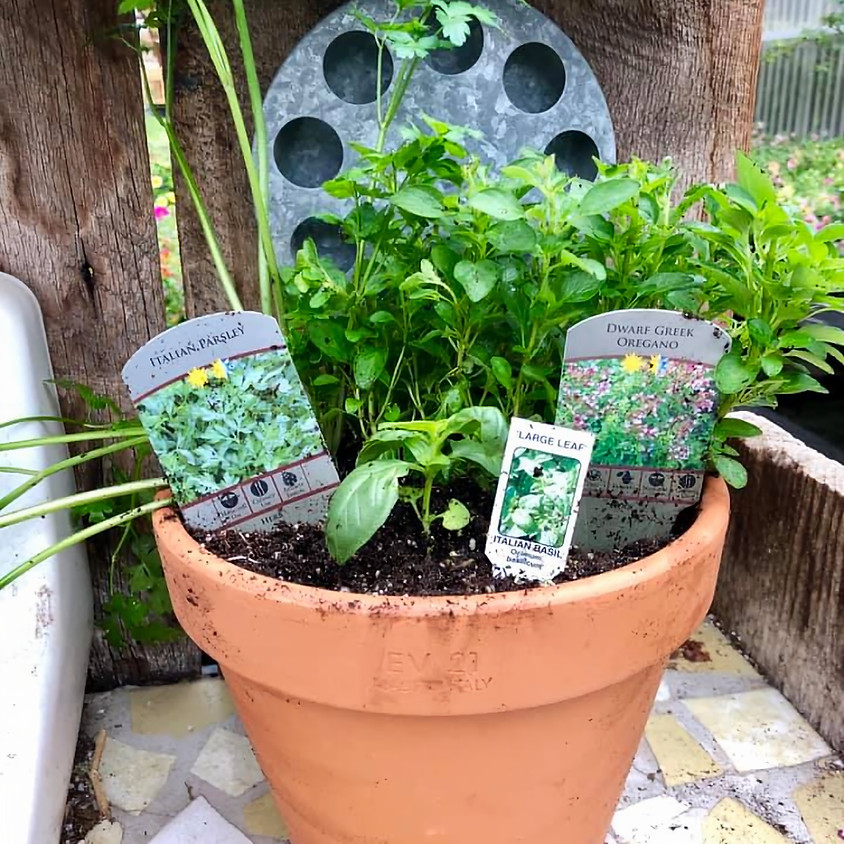 Wine Wednesday: Herb Container Gardening