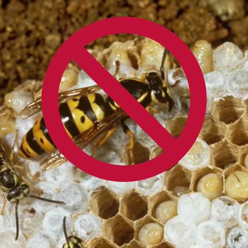 Stop the Queen Bee!