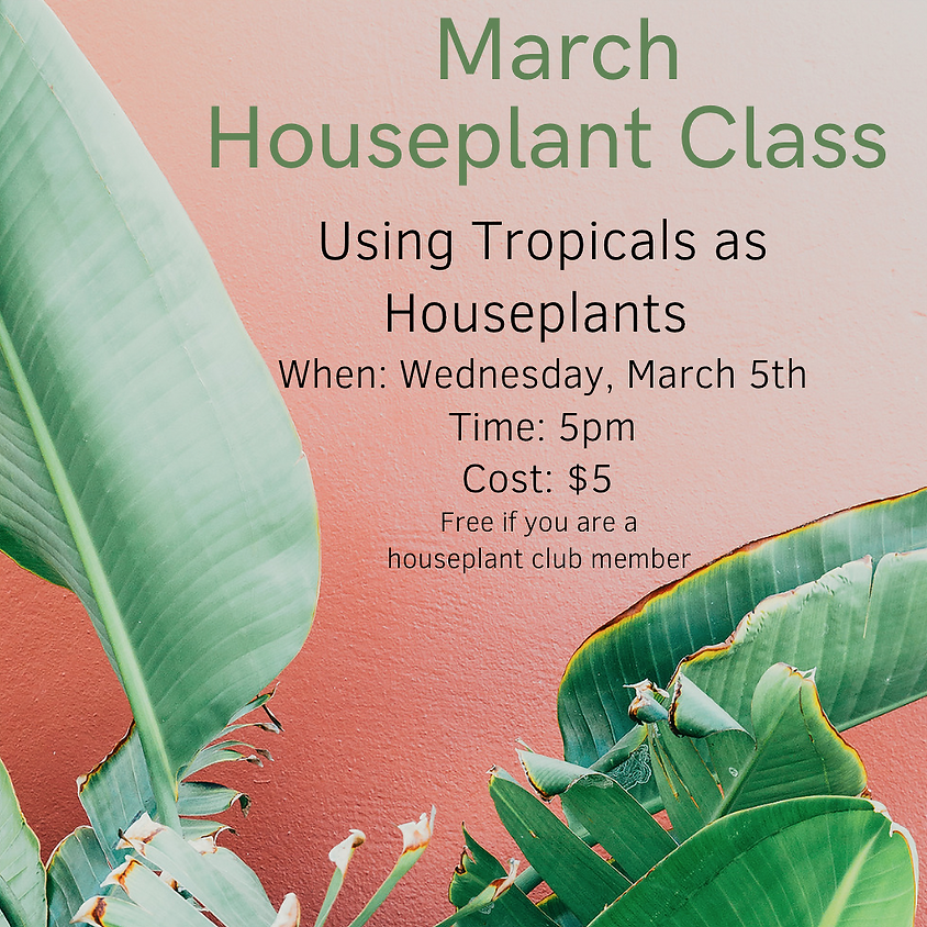 Using Tropical as Houseplants