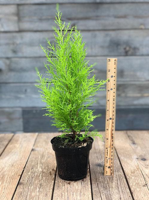 Willma Cypress