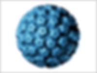 virus_hpv.jpg