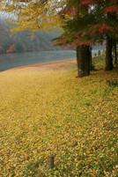 1156黄色い絨毯_edited.jpg
