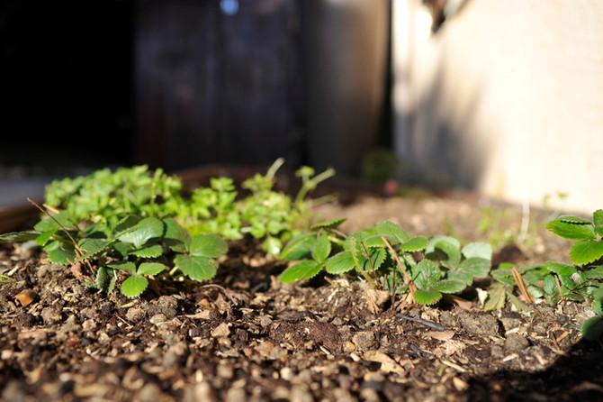 Conseils jardinage en février:
