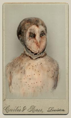 Barn Owl (endangered)