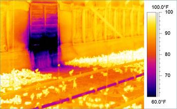 kümes ısı kaybı, tavuk verimini arttırma, tavuklar neden ölür