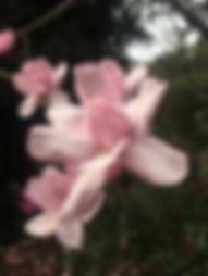 blooms-104.jpg