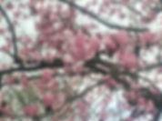 blooms-103.jpg