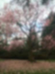 blooms-102.jpg