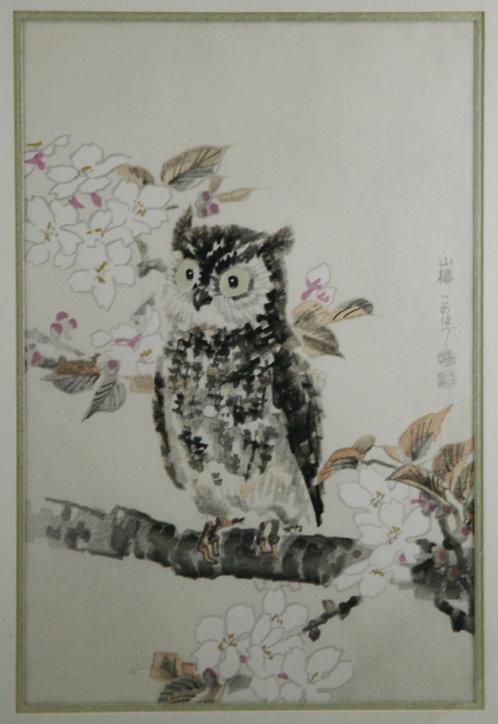 Kotozuka, Eiichi (1906-1979) 'Owl and Cherry Blossoms'
