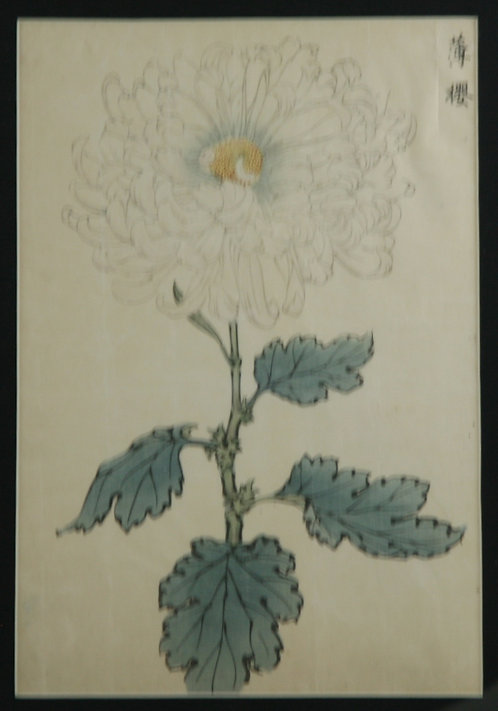 Keika Hasegawa (active 1892-1905) 'Usuzakura' Series One Hundred Chrysanthemums
