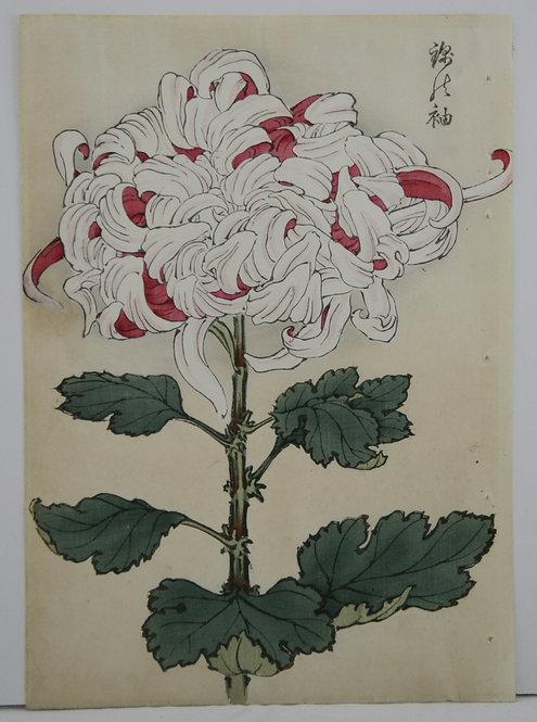 Keika Hasegawa (active 1892-1905)  'Luster of Sword' One Hundred Crysanthemums
