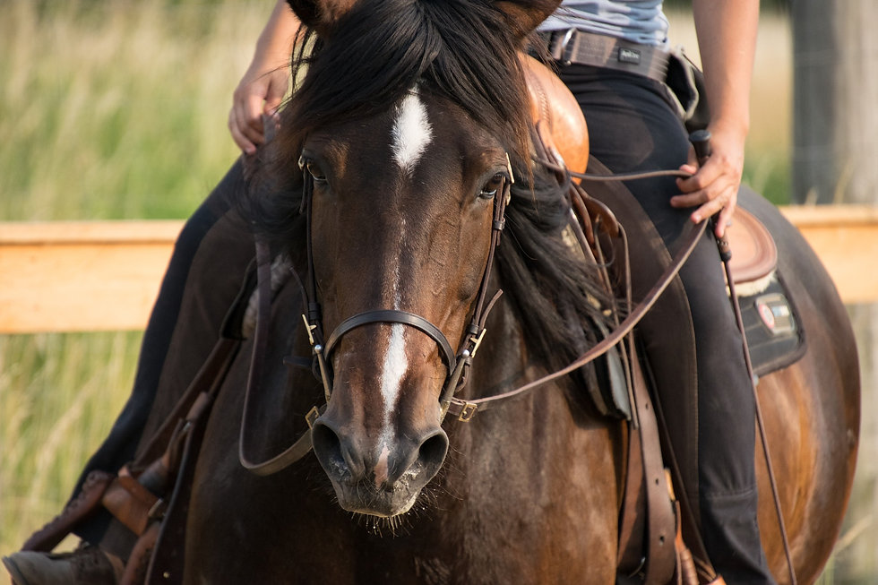 horse-3467988_1920.jpg