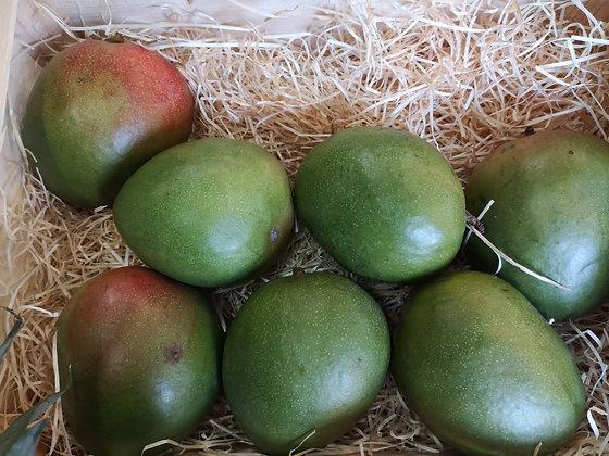 Mangue (Bateau) | Brésil | 1 pièce