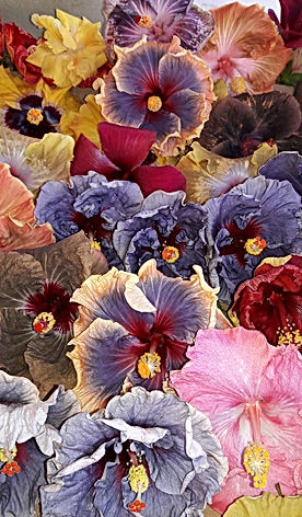 Tropical Hibiscus Collection