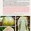 Thumbnail: Funghi in Italia - La Guida - 592 Pagine