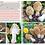 Thumbnail: Funghi in Italia - La Guida - Copertina Flessibile