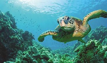 akumal-turtle.jpg