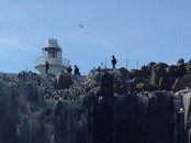 farnes lighthouse 2.jpg