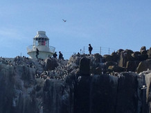 farnes lighthouse 2.jpg