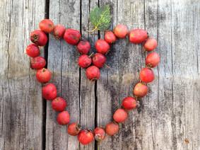 hawthorn-heart.jpg
