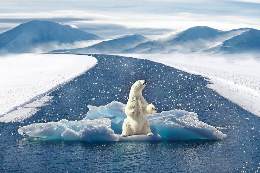 Polar Bear on an Iceberg