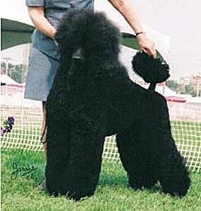 Persi Litter Page Picture.jpg