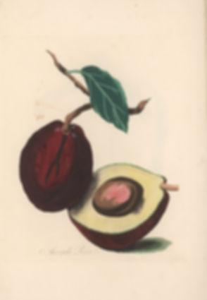 621px-Byam_Avocado_pear.jpg