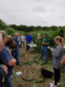 Learning about Corn, Pioneer_edited.jpg