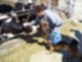 Major Wright, Dirk, KSU Dairy.jpg