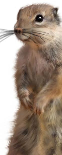 Critter 3.jpg