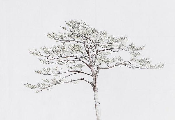 15.12-Rikuzentakata_rebirth_miracle pine