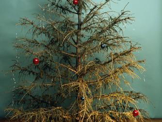 Trees of Guilt