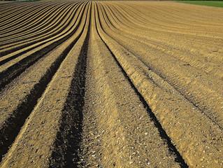 Problemas más comunes en los suelos agrícolas