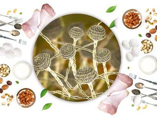 Seguridad Alimentaria: Aflatoxinas