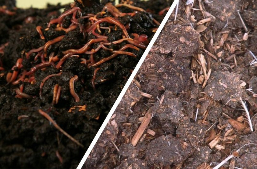 vermicompost vs compost
