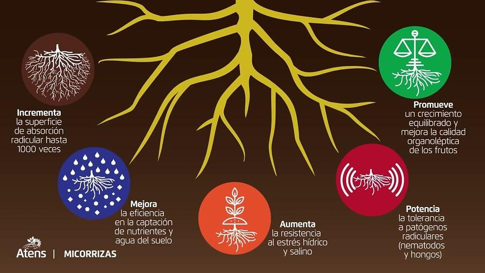 beneficios de las micorrizas